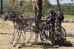 wilde Krieger in Megiddo