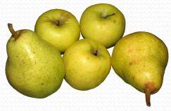 Äpfel und Birnen-Segnung