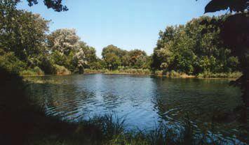 Schillerwasser